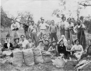 Trabajadores algodón en Villaverde del Rio, Sevilla, en los años 60.